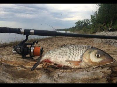 Рыба голавль