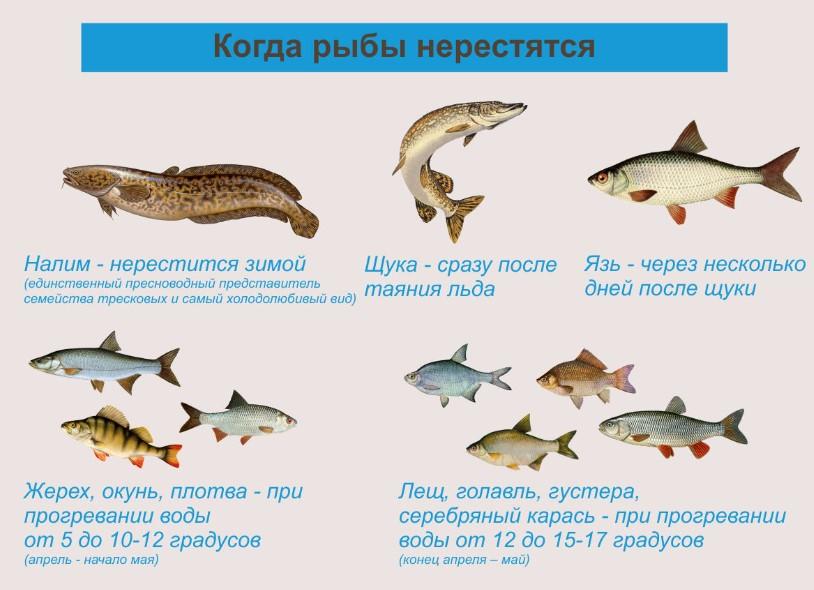 Нерест рыб