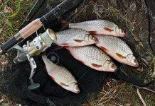 Рыба и удилище