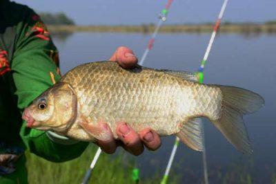 Рыба в руке